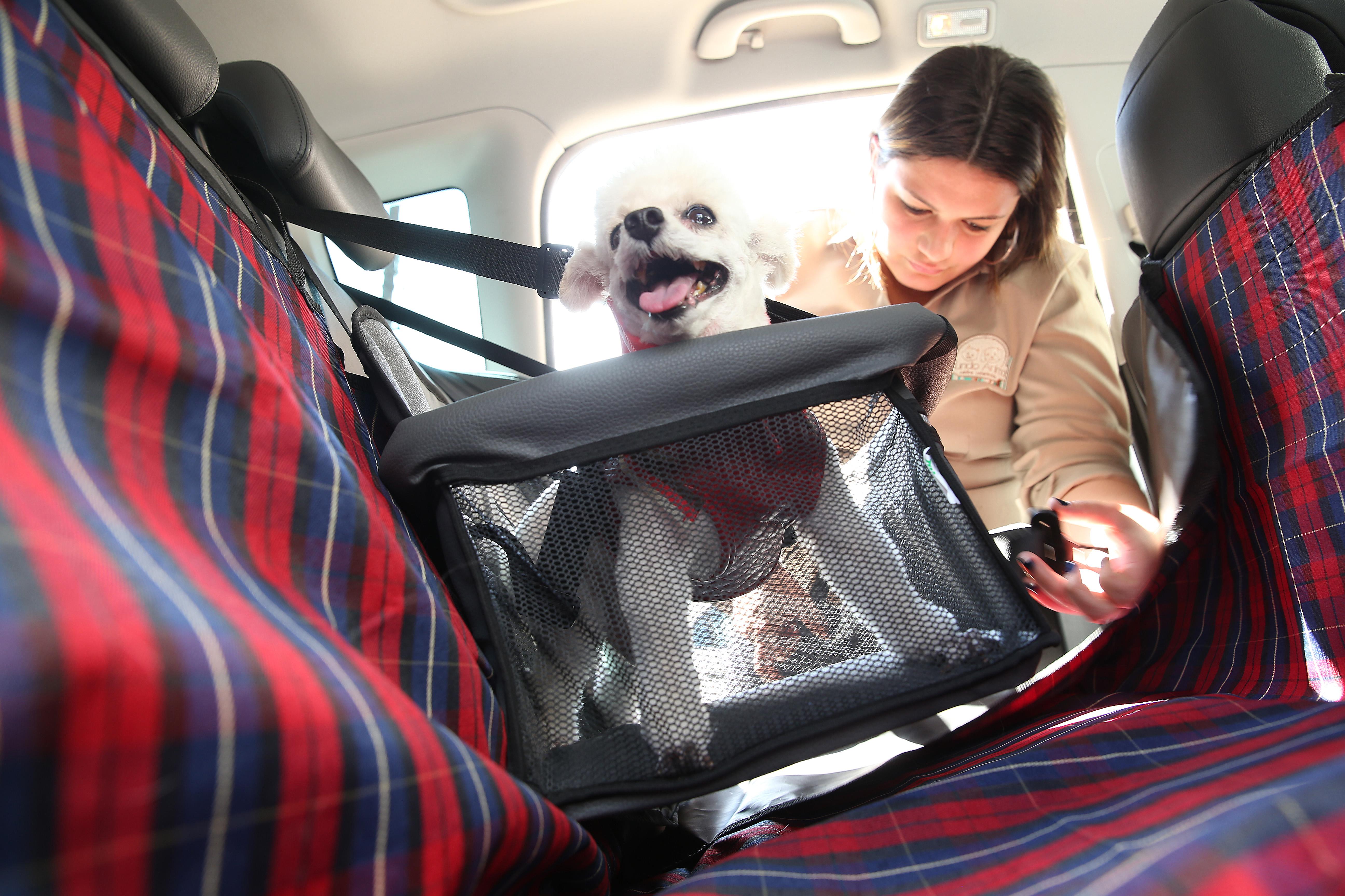 Transporte correto de pets